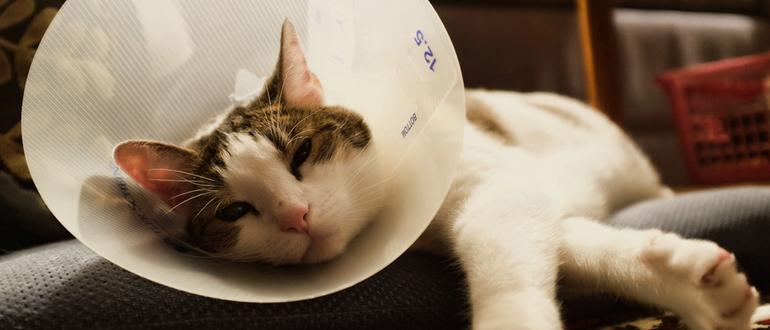 Как помочь пописать коту в домашних условиях 142