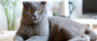 Ушной клещ у кошек: лечение каплями и в домашних условиях, фото, симптомы
