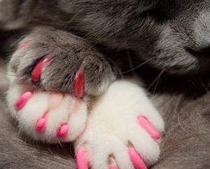 Нужно ли удалять когти кошке: отзывы, последствия, цена