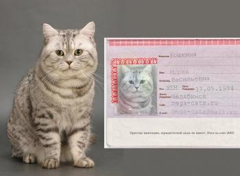 фото и название котов кошек