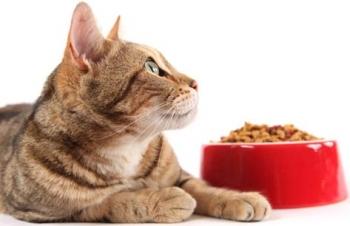 Корм для стерилизованных кошек в домашних условиях: советы и рекомендации