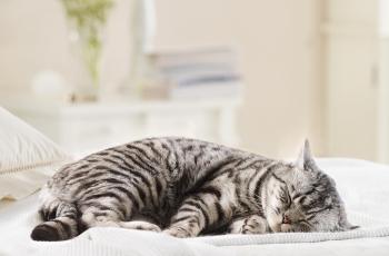 Почему кошка спит на человеке: причины сна на голове