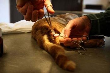 Кастрация кота: причины операции, плюсы и минусы, последствия
