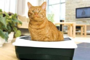 Отучаем кошку ходить мимо лотка: причины и советы