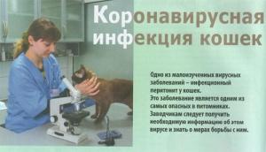 Коронавирусная инфекция у кошек: симптомы и лечение, опасность для других животных
