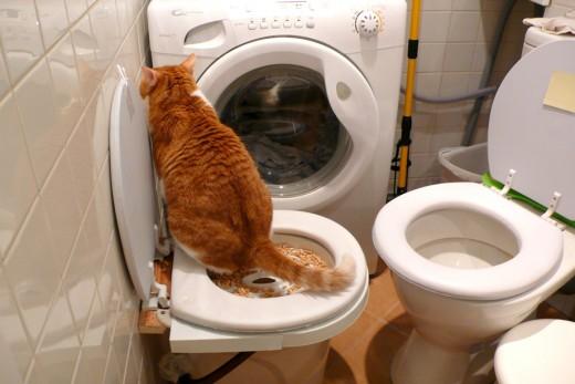 Приручаем котенка к унитазу: специальная подставка, инструкция