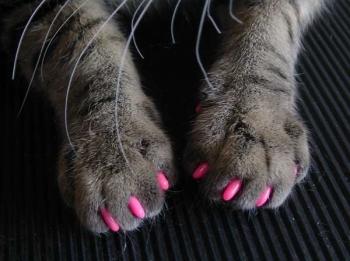 Стрижка когтей у кошек и котят: когтерезки, ножницы, правильная обрезка