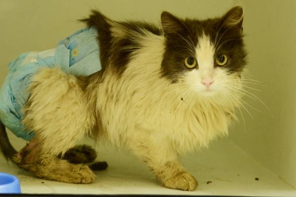Выпала прямая кишка у кошки или котенка что делать