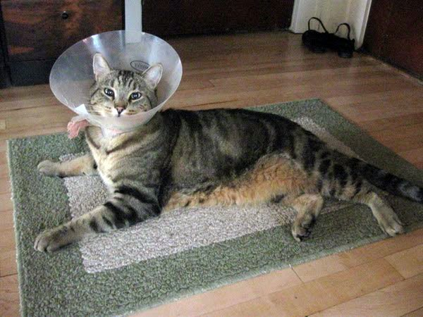 Как сделать воротник для кошки фото 169