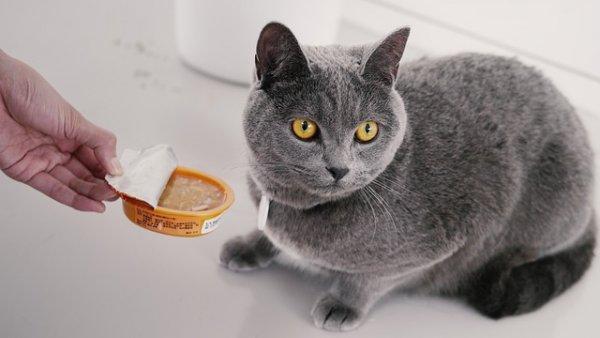 Корм для кастрированных котов