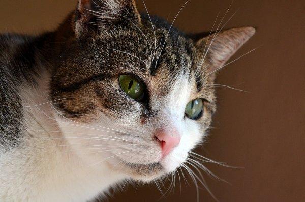 у кота заложен нос