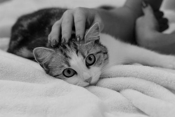 Демодекоз у кошек
