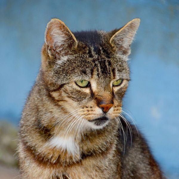 У кошки понос с кровью