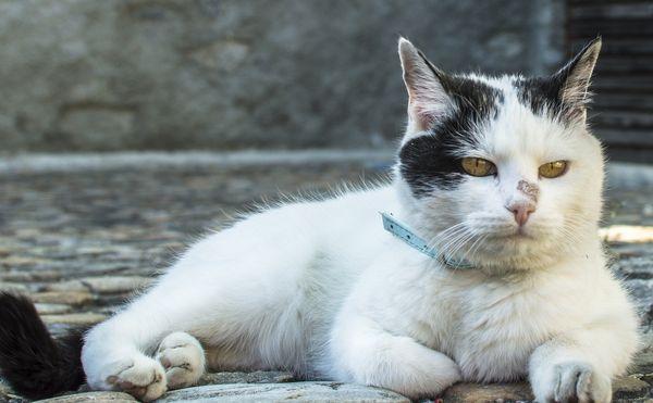 черные точки на подбородке у кота