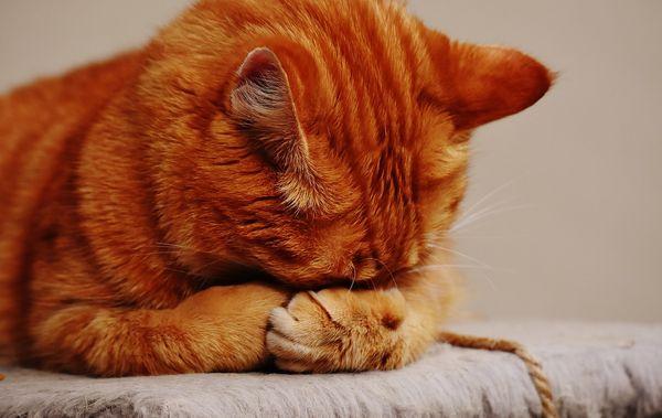 У кошки воспалился глаз, чем лечить