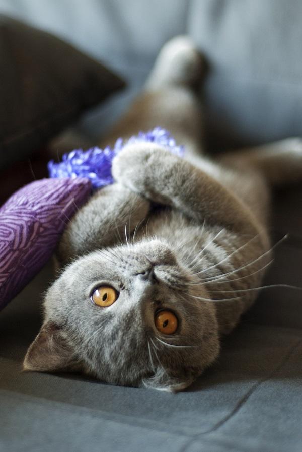 Как поставить капельницу коту в домашних условиях