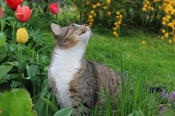 Можно ли глистогонить беременную кошку