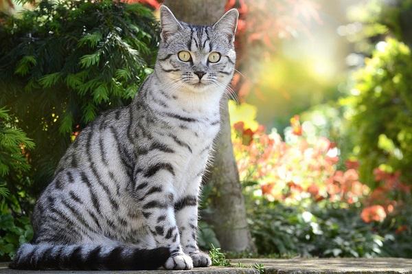 Сколько живут британские кошки в домашних условия