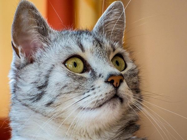 Почему у кота воняет изо рта