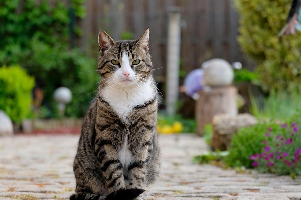 Продолжительность жизни стерилизованных кошек