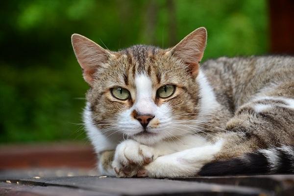 Цистит у кота