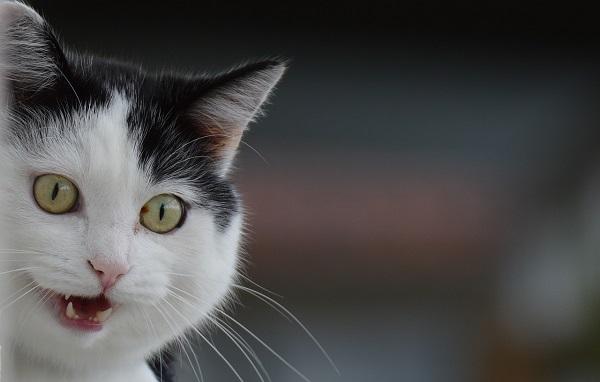 Зубная паста для кошек