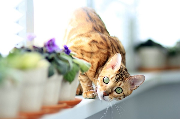 Щелочная фосфатаза повышена у кошки