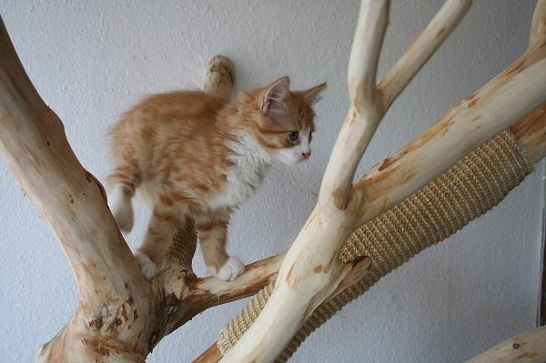 Царапки для кошек