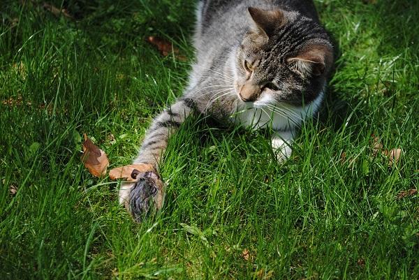Как перевести кошку на натуральное питание