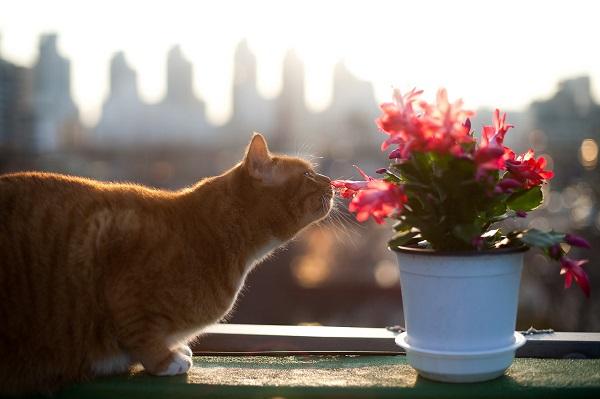 Как отучить кота гадить в цветочные горшки
