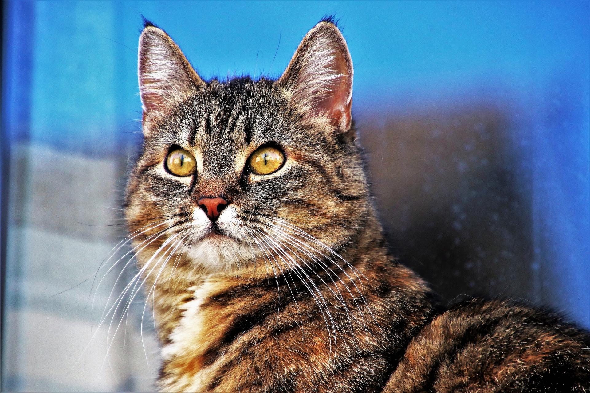 Сколько кошка может прожить без еды