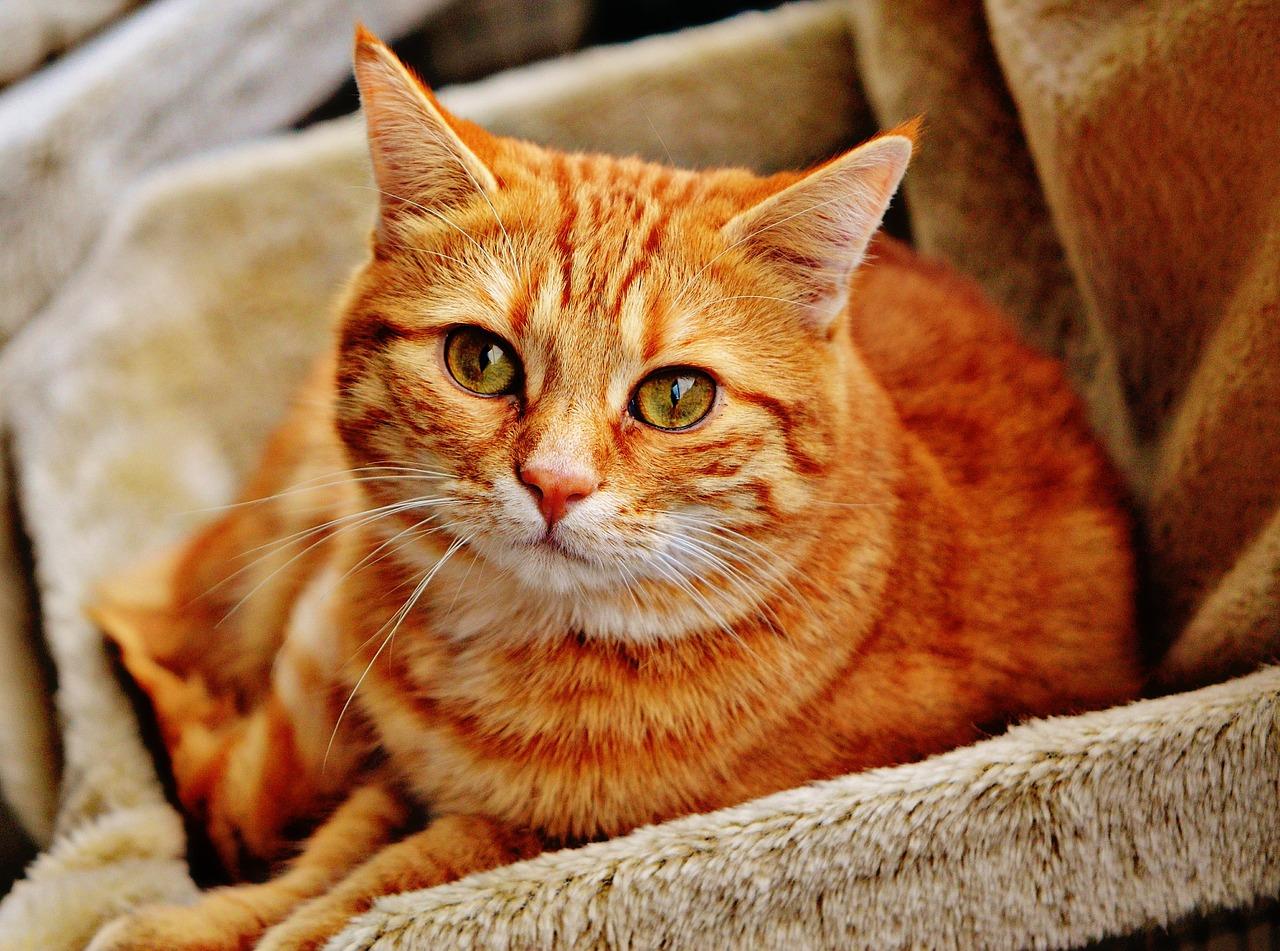 Почему кошки реагируют на валерьянку