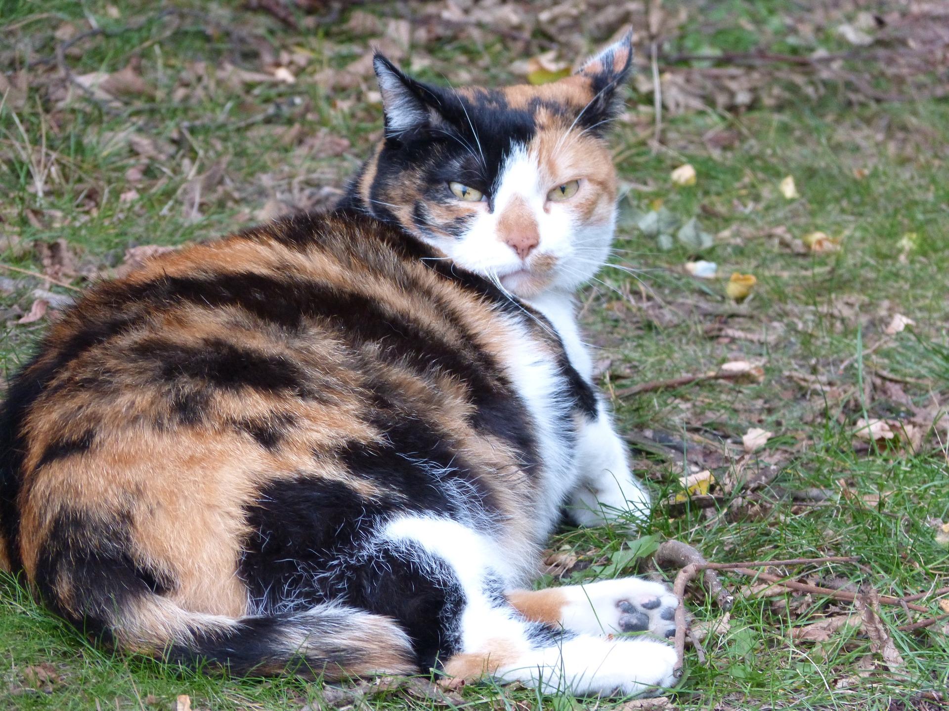 Сколько кошки ходят беременные
