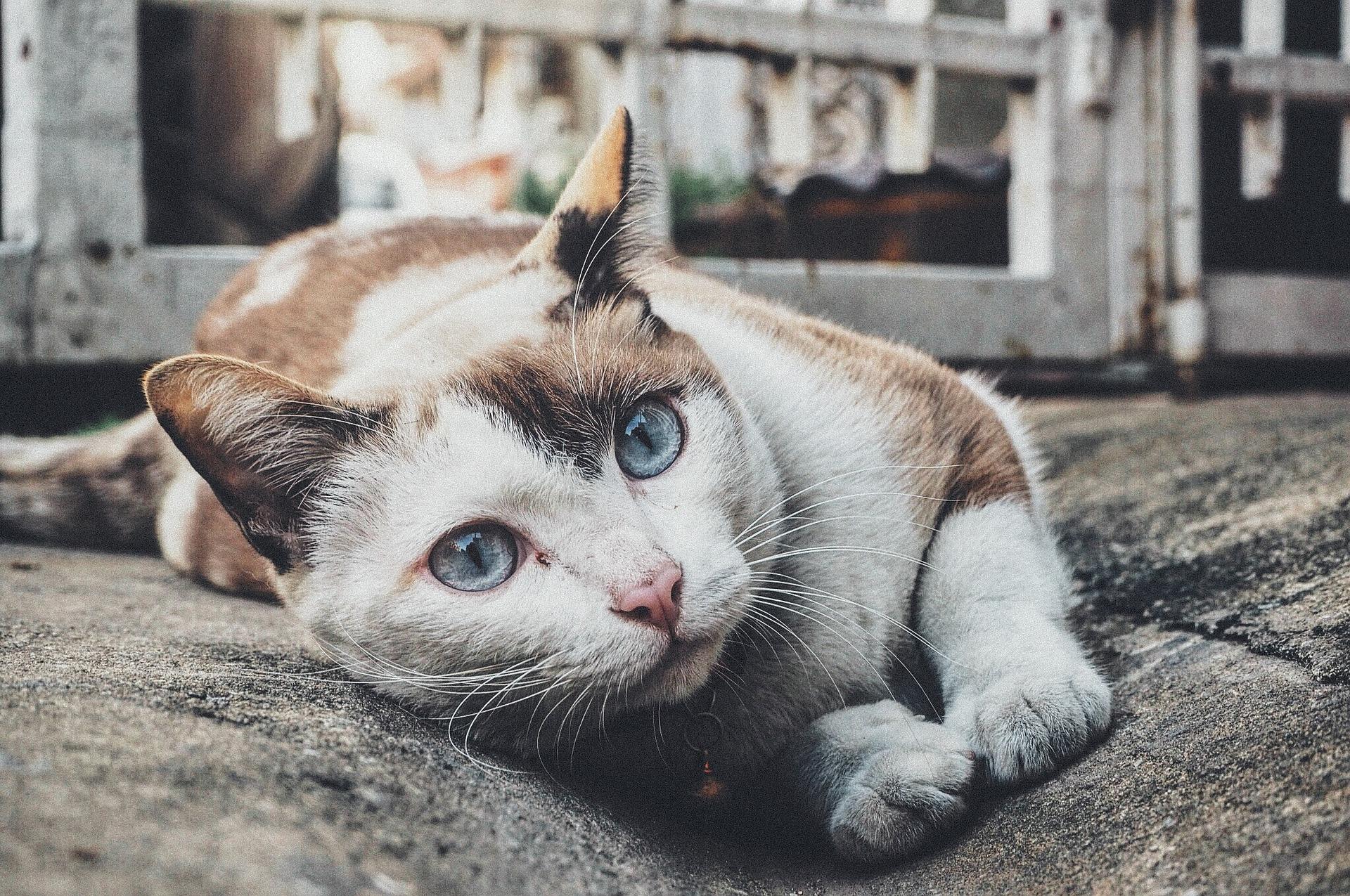 Рак желудка у кошек симптомы