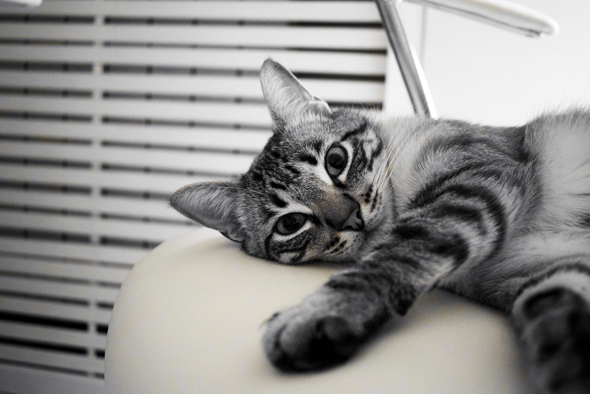 У кота отнялись задние лапы