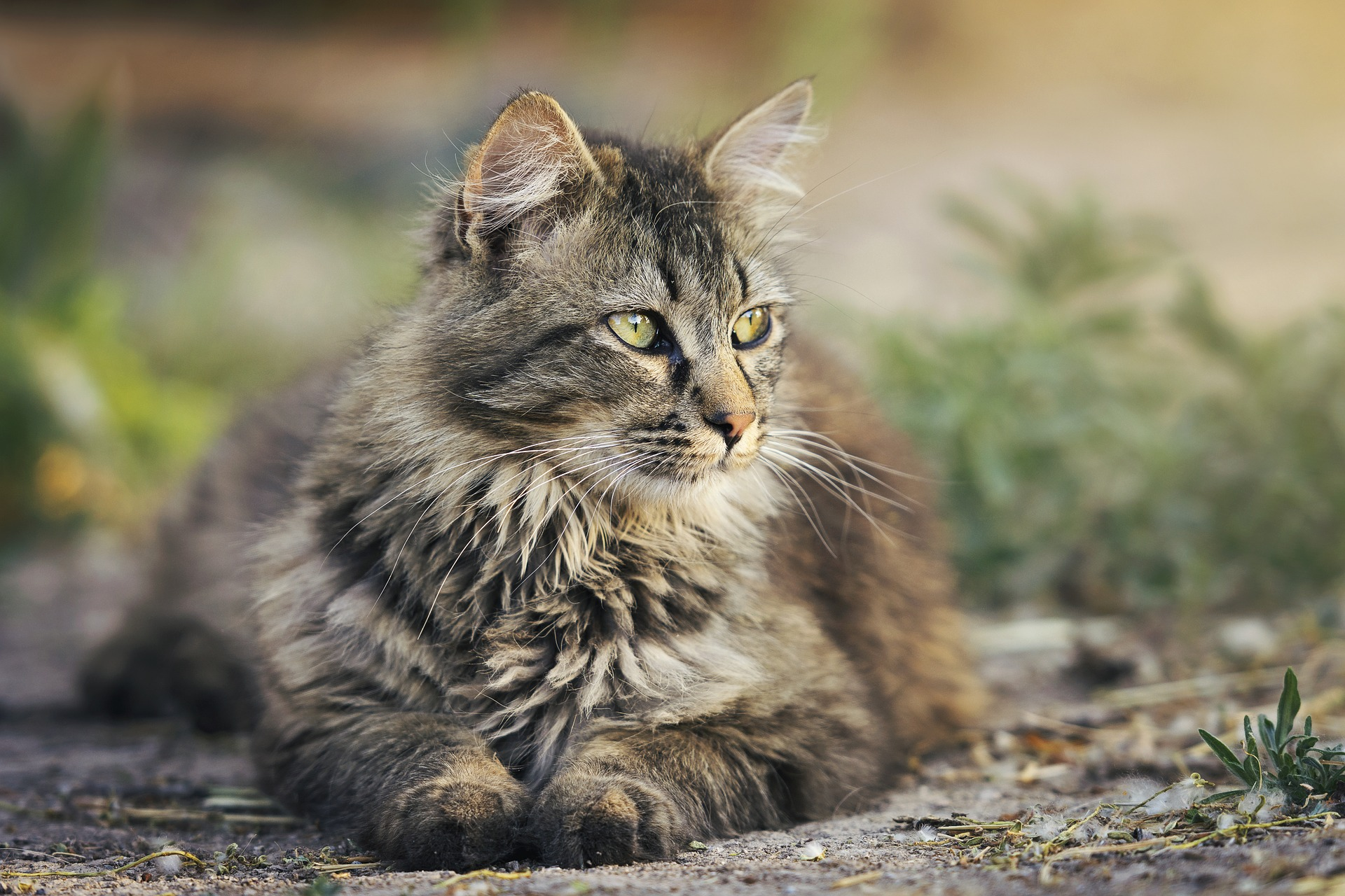 Почему кошки закапывают еду