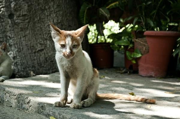 Резко похудел кот
