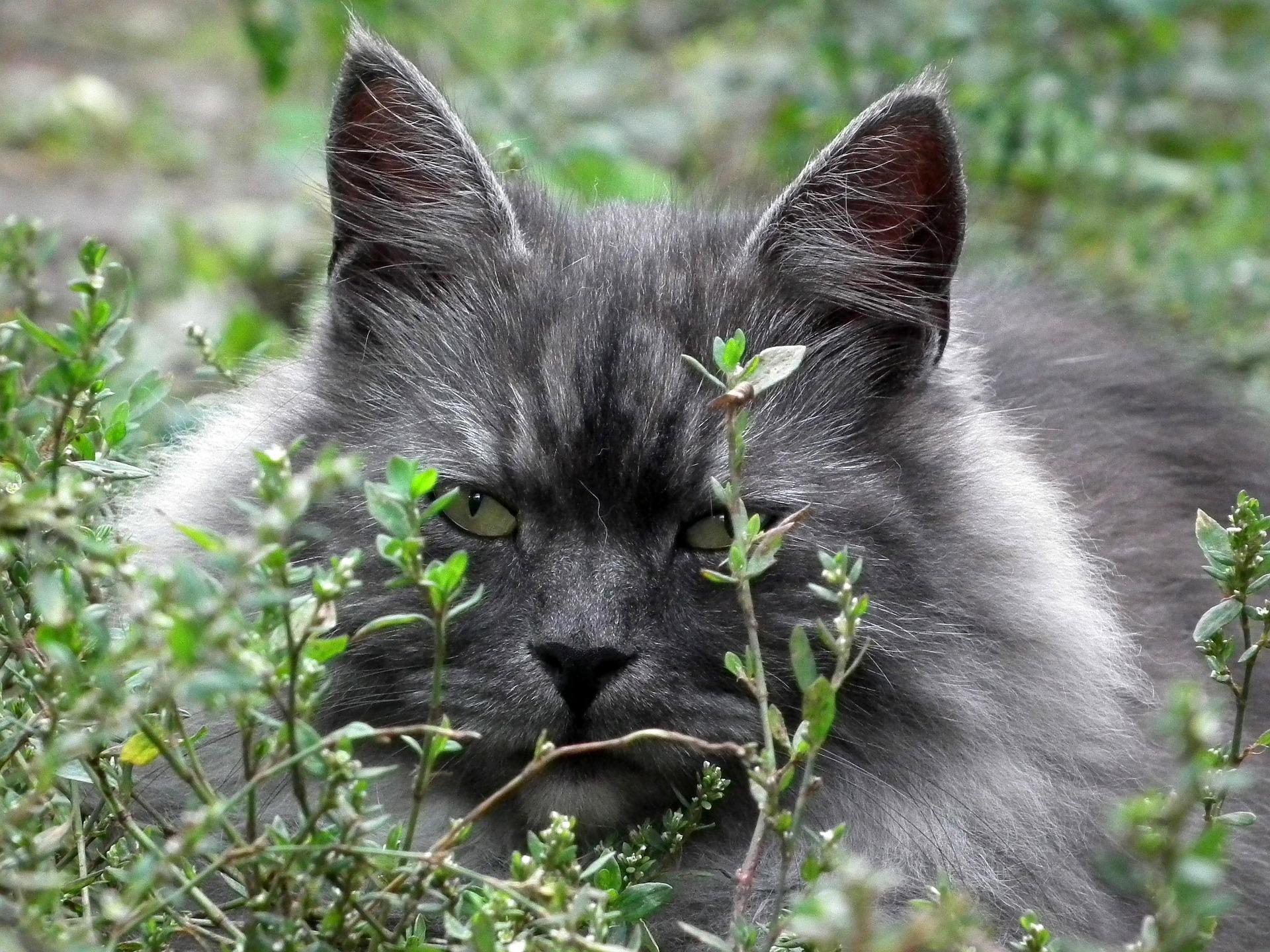 как найти пропавшего кота