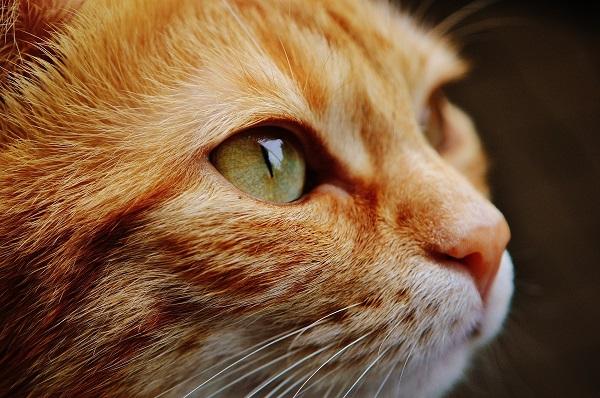 Побелел глаз у кошки