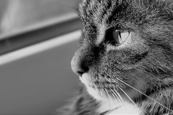 После стерилизации у кошки под швом шишка