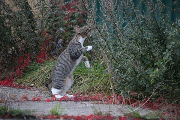 Как ведет себя кошка после вязки