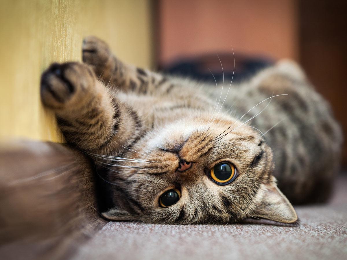 У кота расширены зрачки