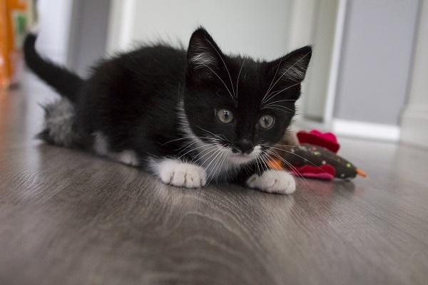Почему кот кусает за ноги хозяйку