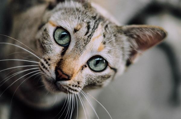 Почему у кошек 9 жизней