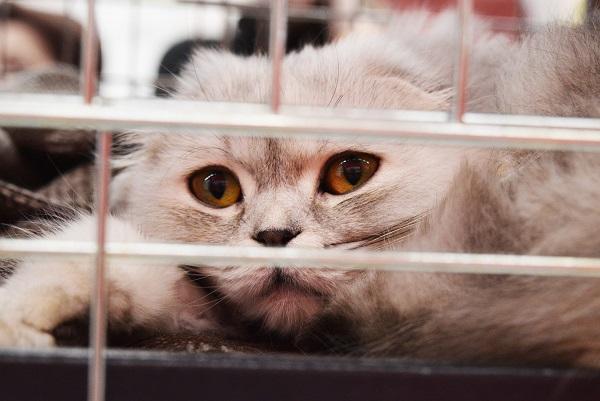 Перелом лапки у кошки