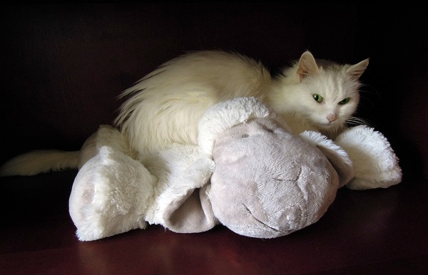 мерзнут ли кошки зимой на улице