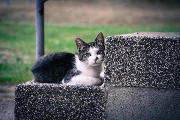 Черный налет в ушах у котенка