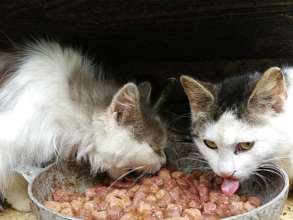 Корм для кошек набора веса