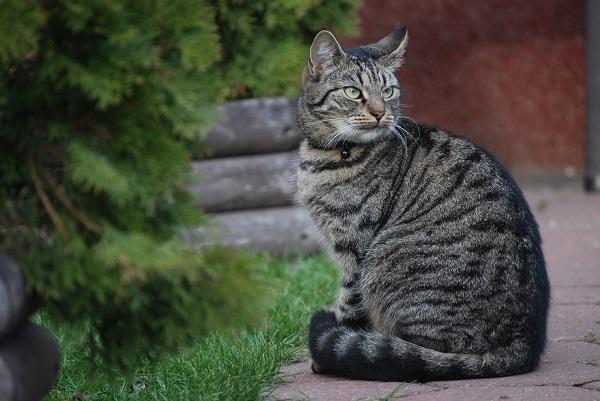 Язва желудка у кота
