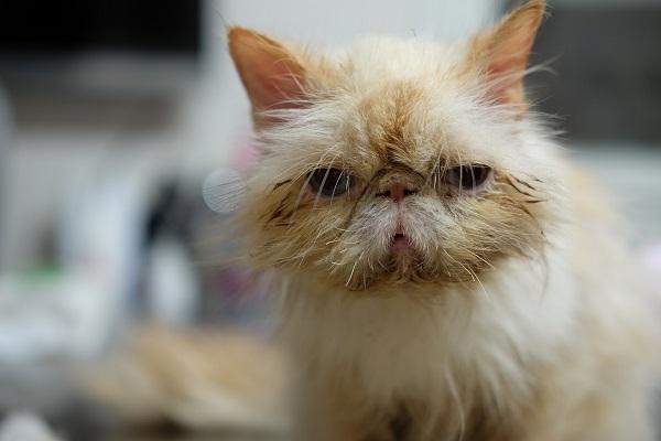 цистотомия кота